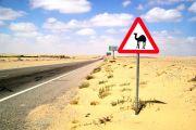 Wüste und Oasen